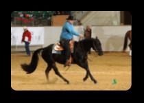 langer-horsetraining